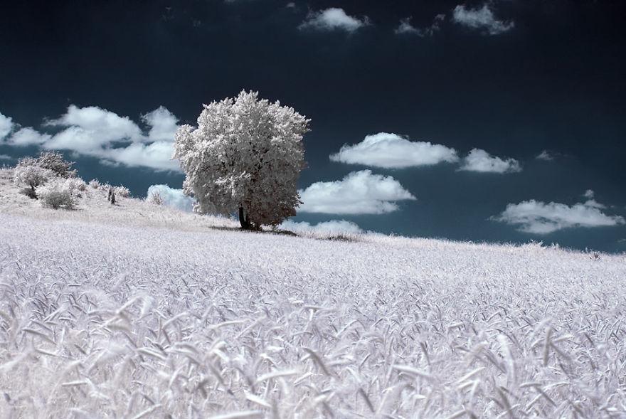 8. Инфракрасные пейзажи будто из другого мира.