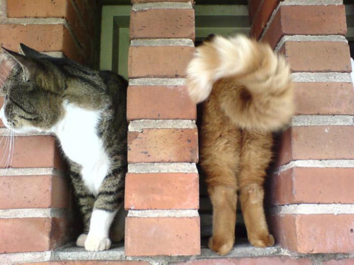 4. Двойной кот.