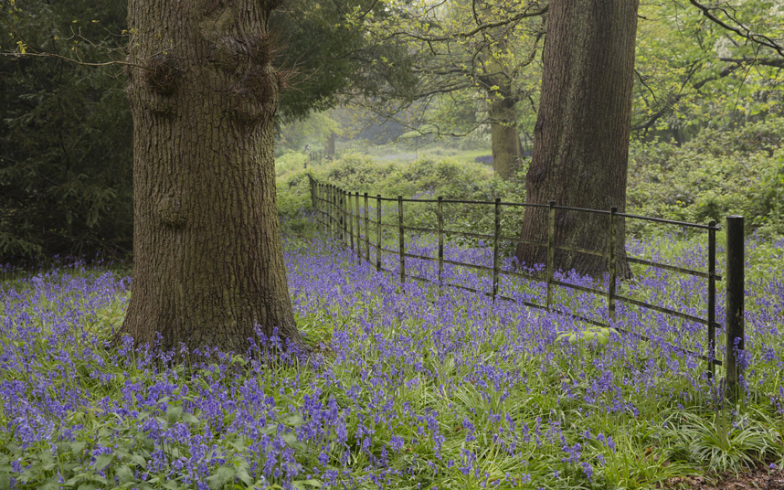 10. Некоторые колокольчики могут появиться уже в марте, если начало весны выдалось очень теплым.