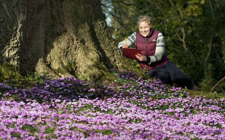 2. Еще один весенний цветок – цикламен. В природе они цветут осенью или ранней весной, преимущественно в Европе. Глядя на такую красоту в магазине, хочется купить пару больших вазонов для цветов и засадить их этими прекрасными цветами.