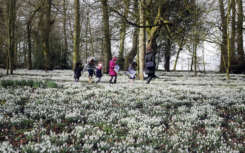 8. Целое поле подснежников в Восточном Йоркшире, Великобритания. Это место привлекает тысячи посетителей каждую весну. В выходные люди приезжают сюда, чтобы полюбоваться чудесным весенним цветением белого ковра из подснежников.