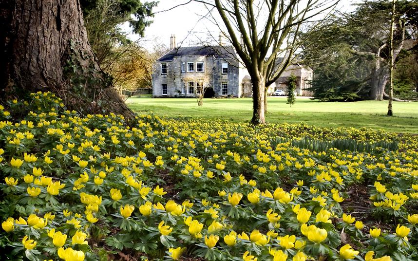 9. Потрясающий зимний аконит радует взор своим солнечным желтым цветом.