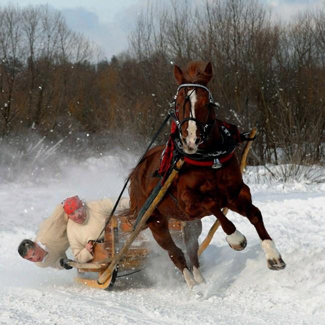 13. Когда лошадь поняла, что в санях не Санта Клаус
