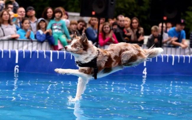 20. Просто собака. Просто ходит по воде.