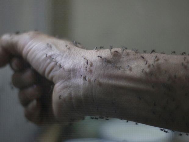 12, Один случай заболевания был выявлен в Гватемале в середине ноября.