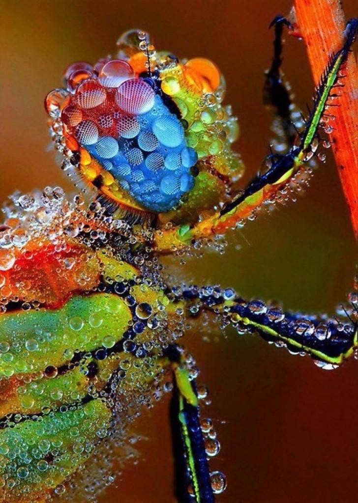 14. Стрекоза, покрытая капельками дождя.