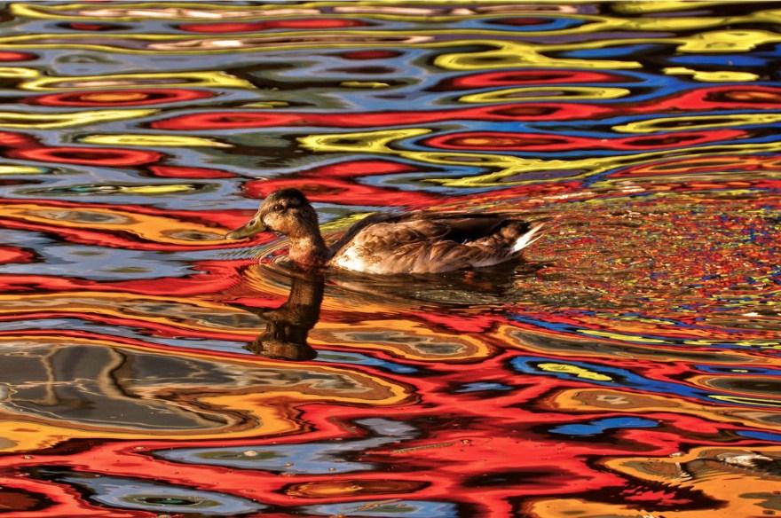 9. Цвета осени, отражение в воде.