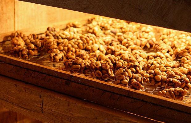 7. Зерна тщательно сушат.
