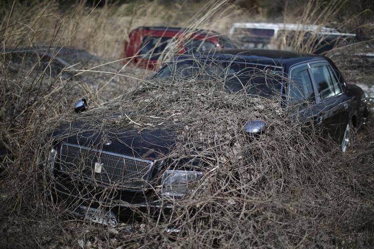 9. Пять лет после катастрофы. Растения обволакивают брошенные автомобили.