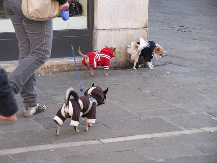 8. Гуляйте с собакой.