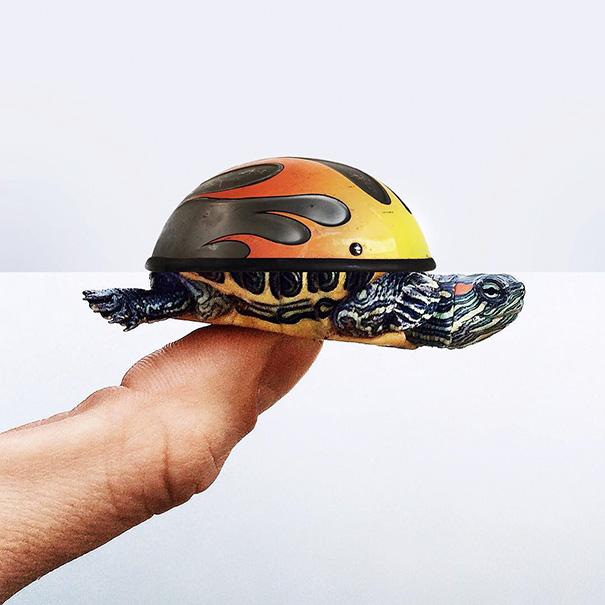 22. Шлем и черепашка.