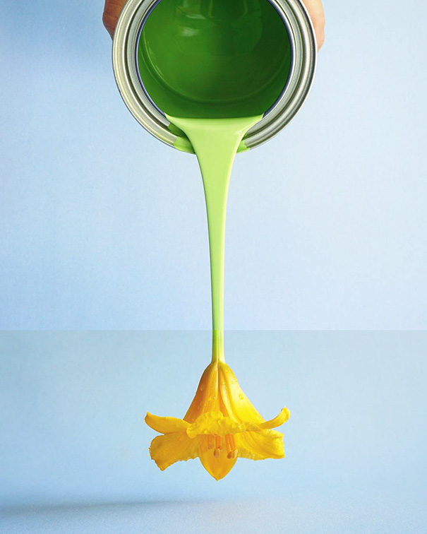 24. Зеленая краска и лилейник.
