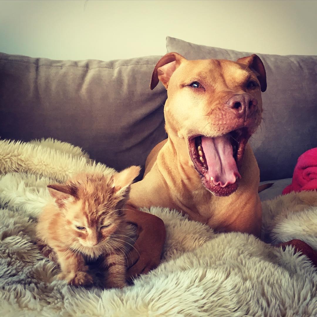 5. Крошечный рыжий котенок, так же, как и Бубба, был взят из приюта для бездомных животных.