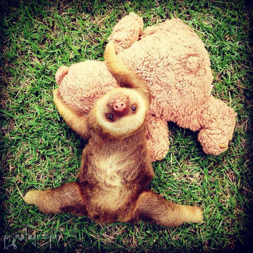 14. «При посещении страны, в которой обитают ленивцы, никогда не соглашайтесь на платные развлечения с ними: подержать в руках, потискать, сфотографироваться с ним и так далее».