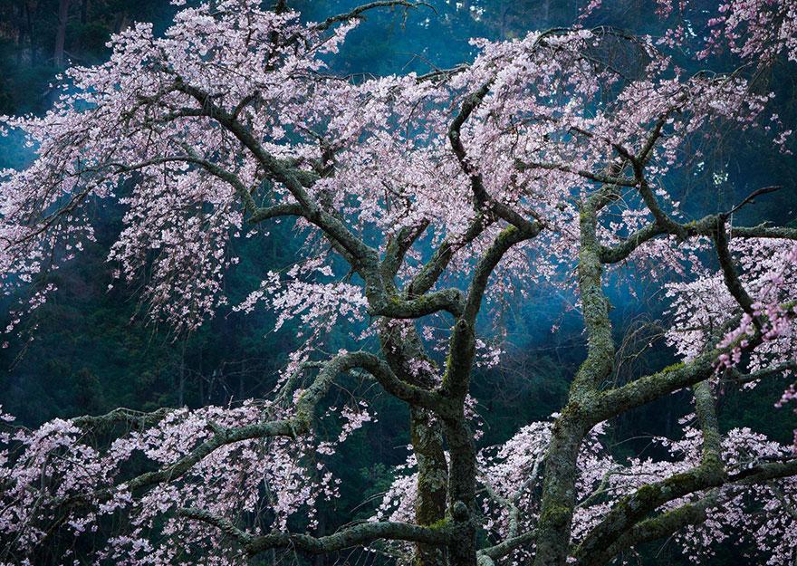 15. «Очарование», Япония.