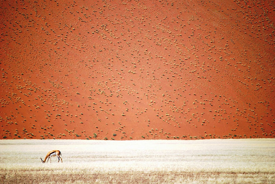 9. «Пустыня Намиб», Намибия,