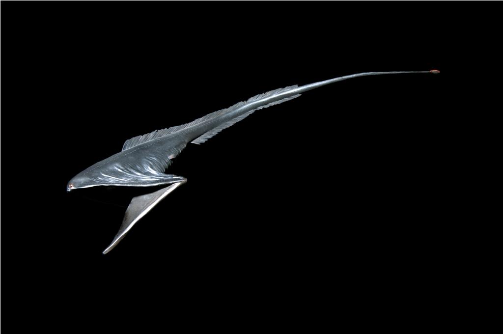 13. Мешкоротообразные живут на глубине до 3 тысяч метров. Поэтому вряд ли вы их встретите.