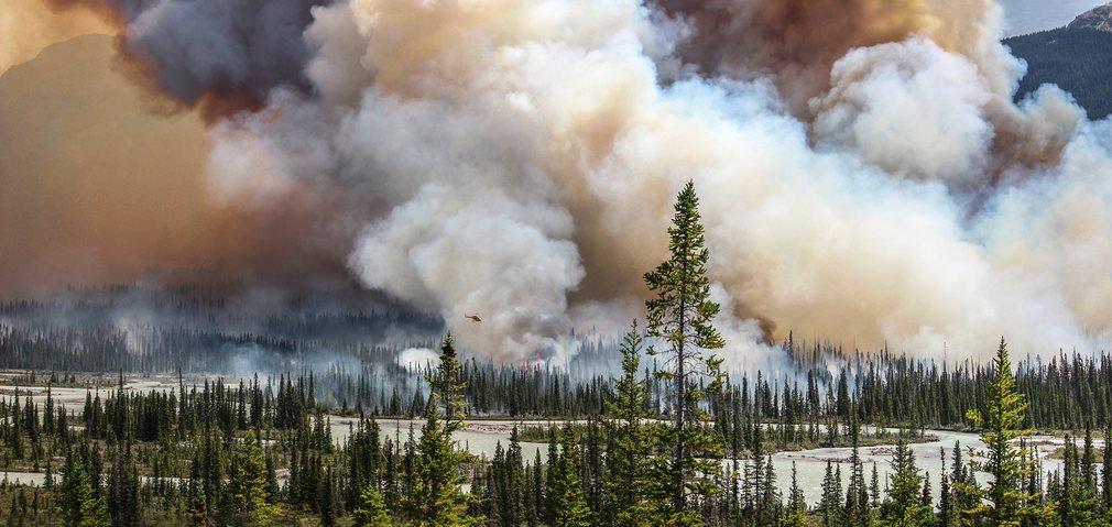 1. Звание экологического фотографа 2016 года присуждается Саре Линдстрем за ее фотографию «Wildfire».