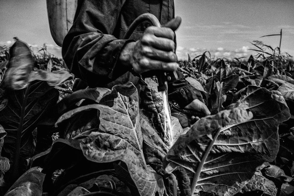 12. Сесар Родригес. Артемио уже 50 лет применяет пестициды на табачных полях в Мексике. Постоянный контакт с химикатами все больше подрывает его здоровье.