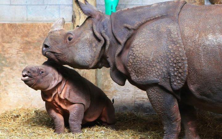 6. Рог носорога: 99,5 $ за грамм.
