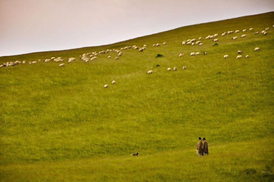 6. Пастухи со своими овцами на холмах Трансильвании.