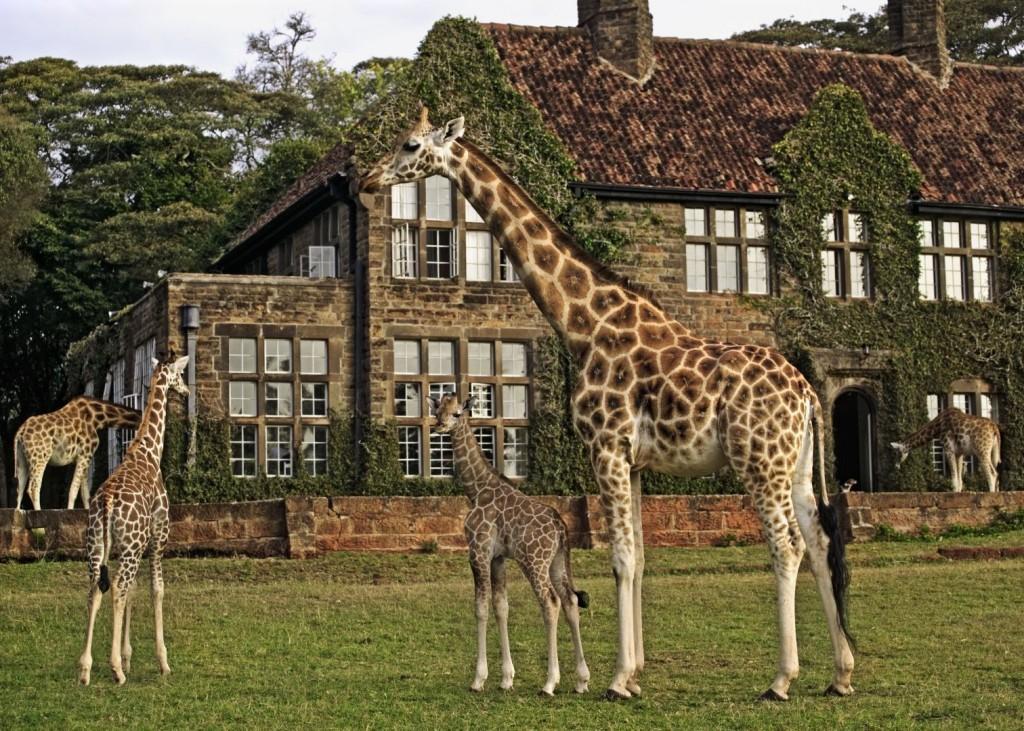 1. Если вы действительно хотите прикоснуться к дикой природе западной Африке, то вам прямая дорога в столицу Кении Найроби.
