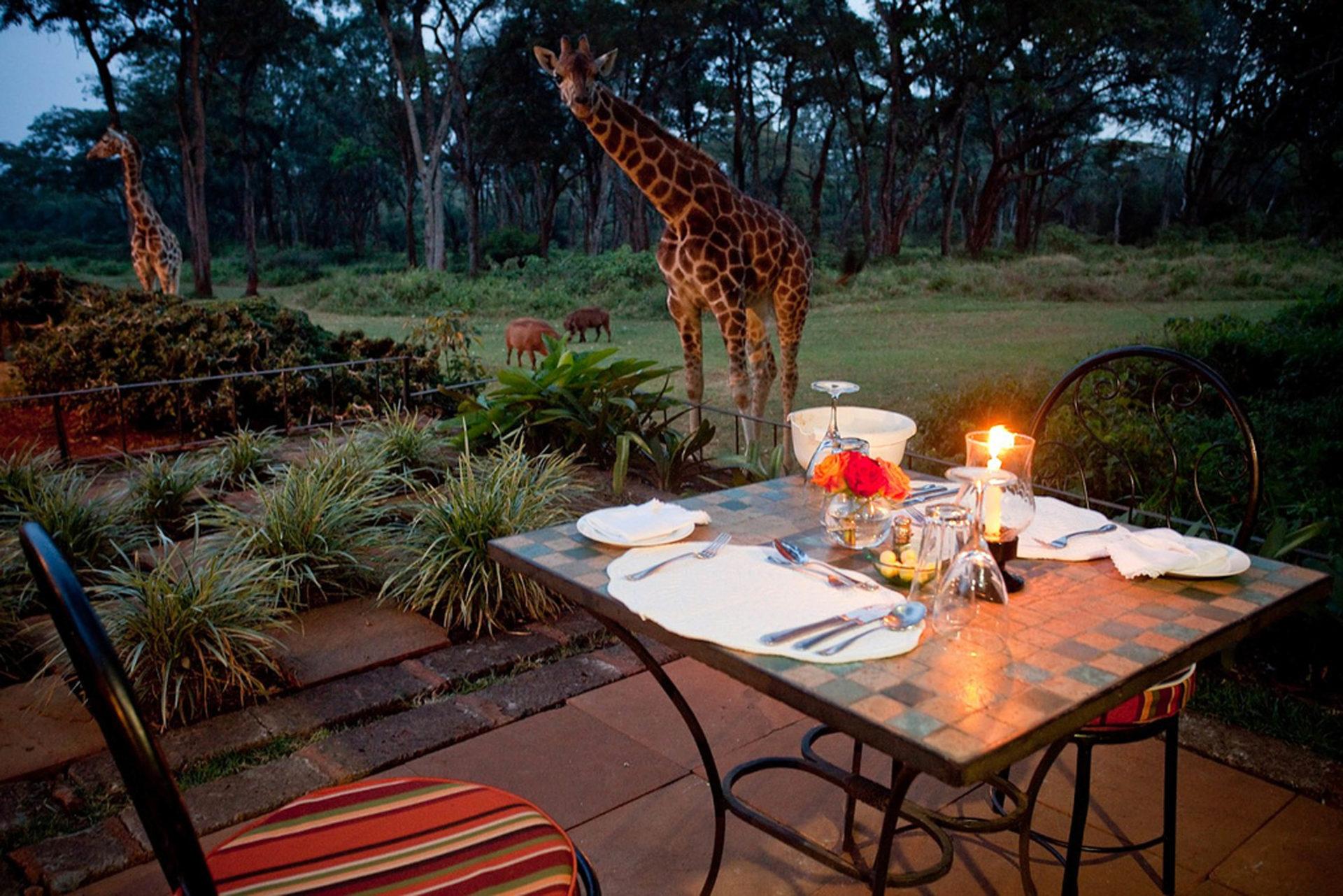 8. Возле отеля растут прекрасные сады где жирафы могут гулять.