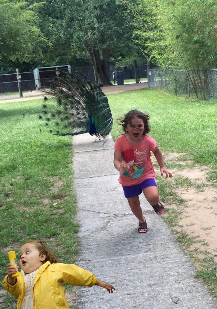 9. Беги, сестренка, беги!