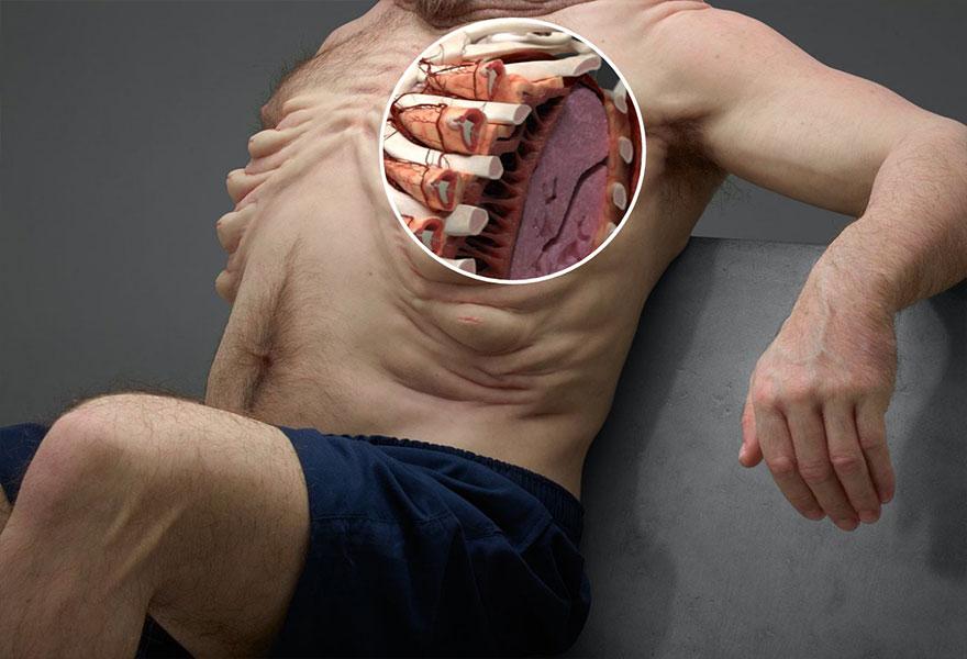 8. Ребра Грэма защищены особыми тканевыми мешками, которые выполняют роль подушек безопасности.