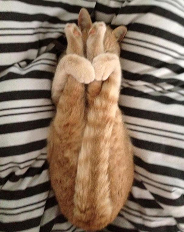 15. Коты – лучшие йоги.