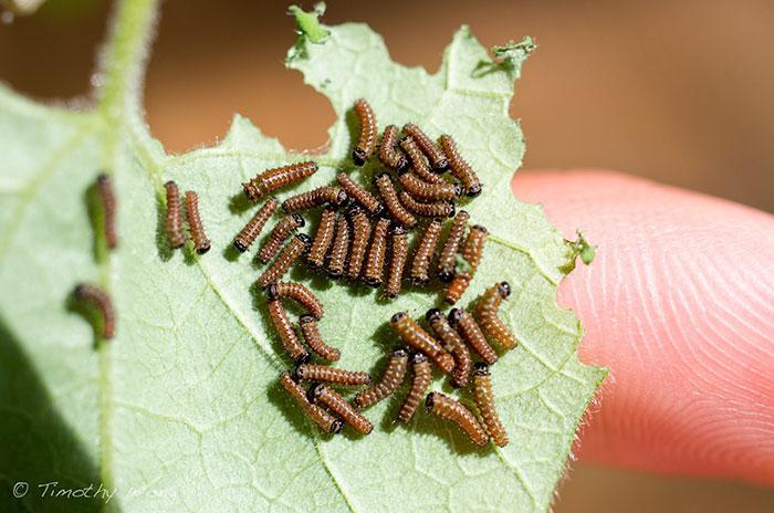 5. Тим начал с того, что принес в сад 20 гусениц.