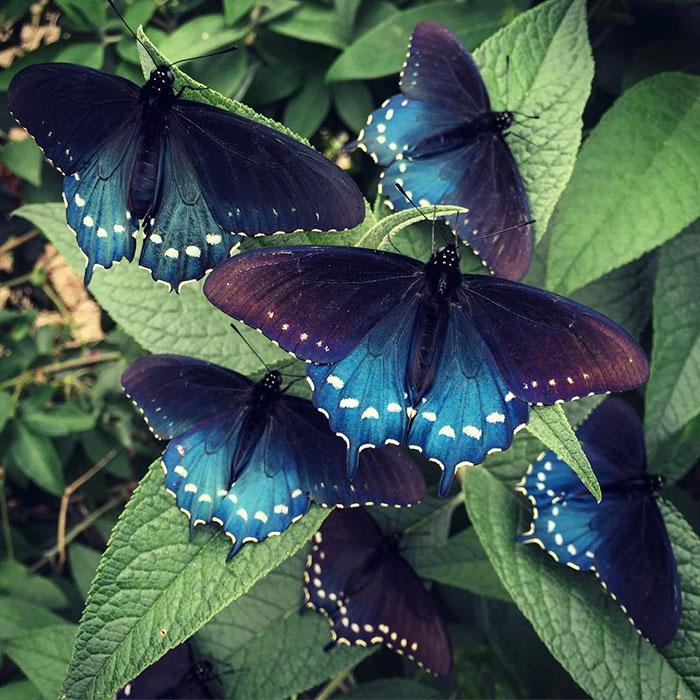 9. «Каждый год мы видели все больше бабочек, летающих в саду, откладывающих яйца, из которых потом появляются гусеницы, успешно окукливающиеся и стающие новыми бабочками» - делится своей радостью Тим Вонг.