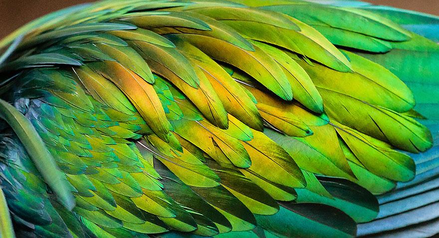 7. Птица имеет очень красивое оперение.
