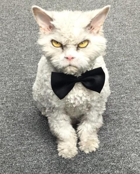 2. Кот стал знаменитостью благодаря своему выражению лица.