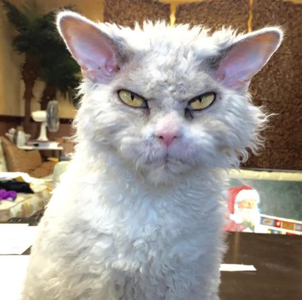 7. Хозяева Альберта завели ему страничку в Инстаграм и выкладывают туда фото кота в разных ситуациях.