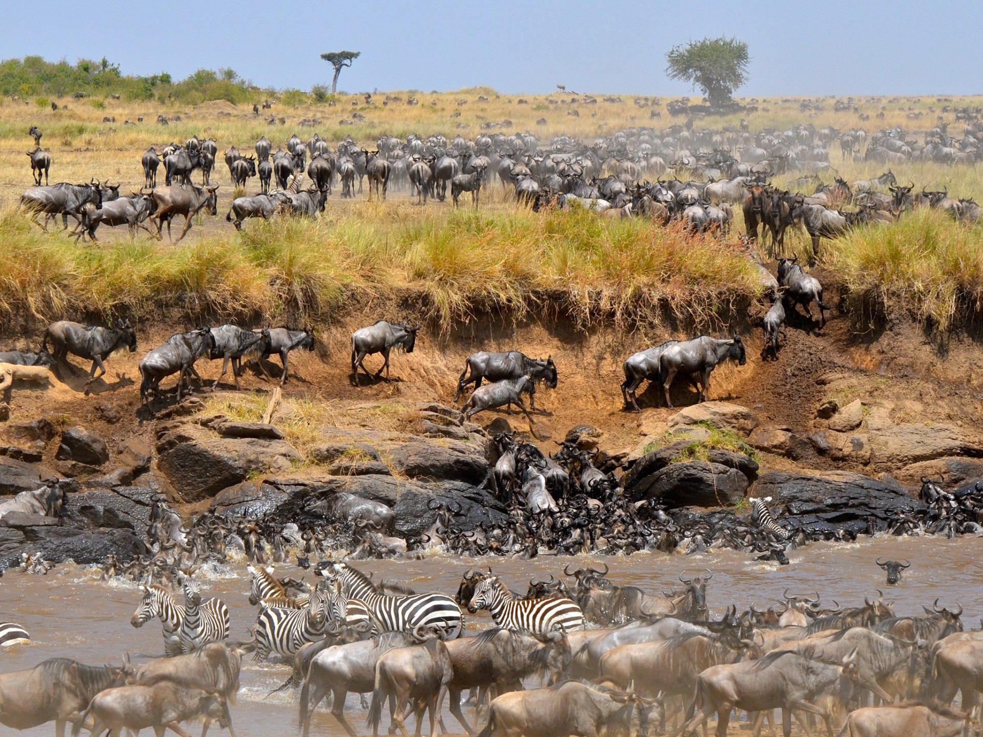 3. Антилопы гну – Кения и Танзания.