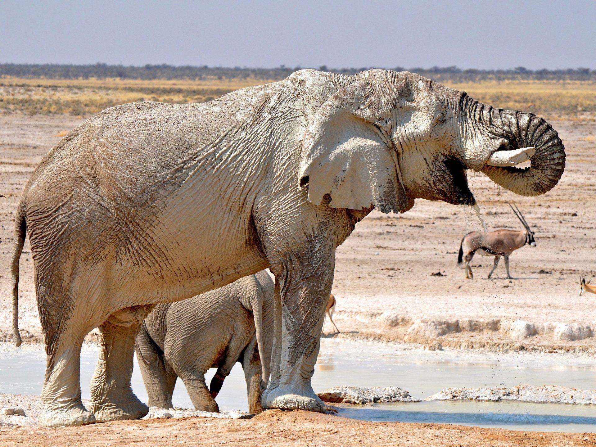 5. Африканские Буш слоны – Намибия.