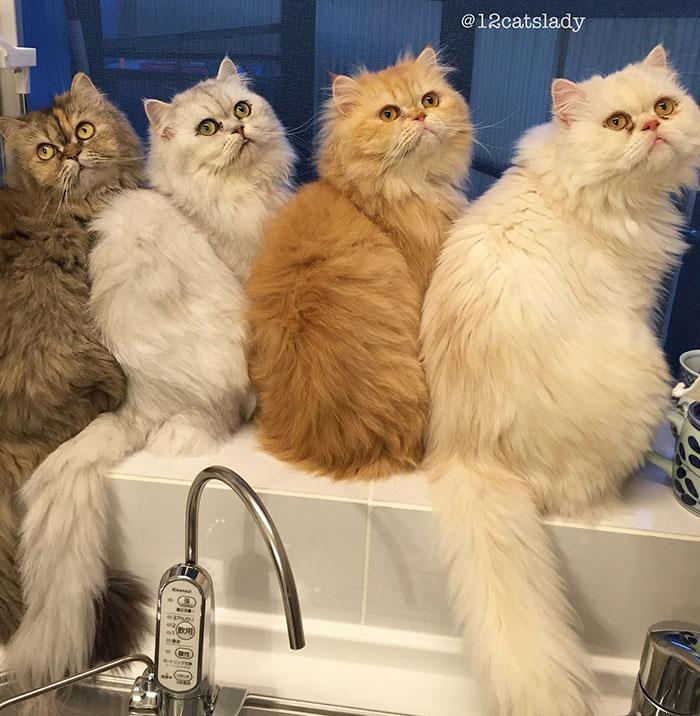 5. «Я счастлива и мне не важно, что другие люди думаю обо мне, узнав, что у меня живет 12 кошек», - говорит хозяйка кошек.
