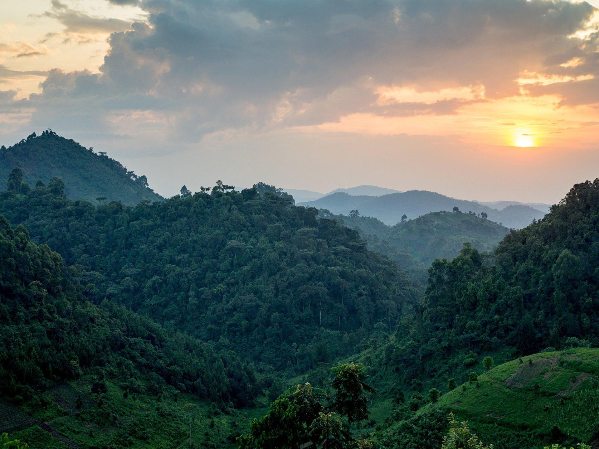 10. Лес Бвинди, Уганда.