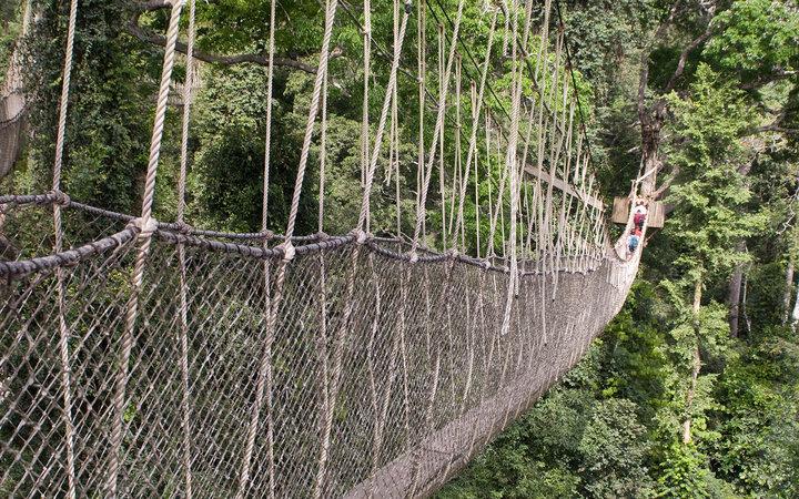8. Мост Canopy Walk, Гана.