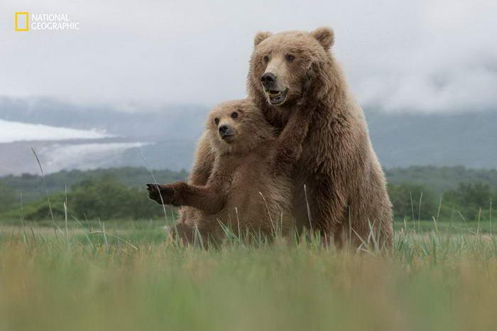 2. Медвежьи объятия.