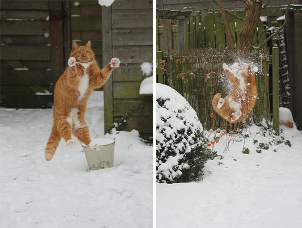 11. Игра в снежки пошла не по плану.