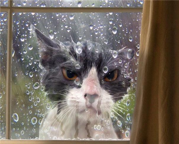 3. «Как вы могли оставить меня здесь в такую погоду?!».