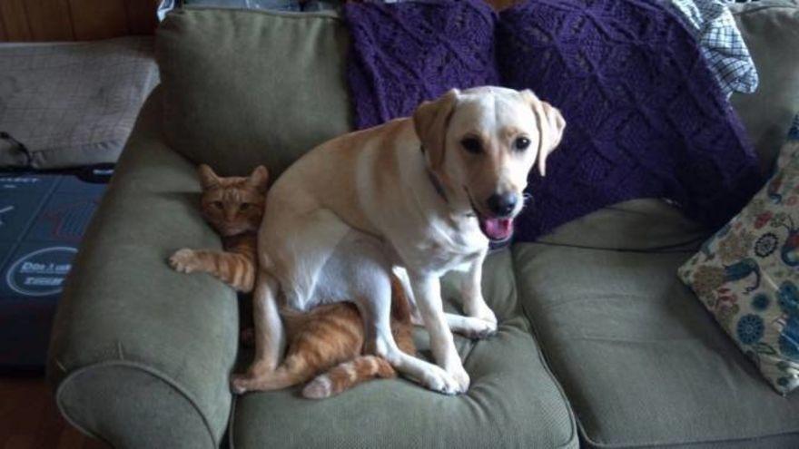 6. «Как замечательно, что ты привел собаку в дом… Сразу видно, как ты меня любишь».