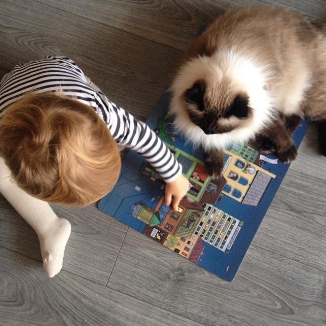 1. Кошка и ребенок могут вместе играть.