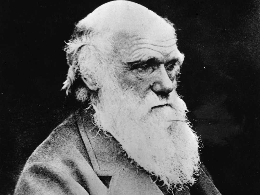 9. Чарльз Дарвин считался средним учеником. Он отказался от карьеры в медицине и собирался стать пастором.