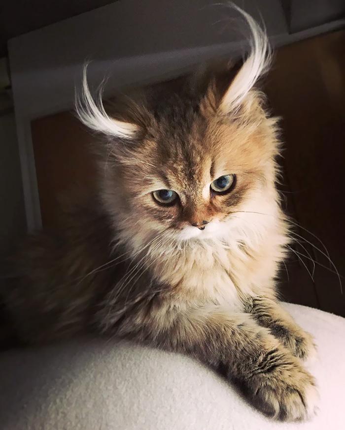 4. Кот-антилопа.