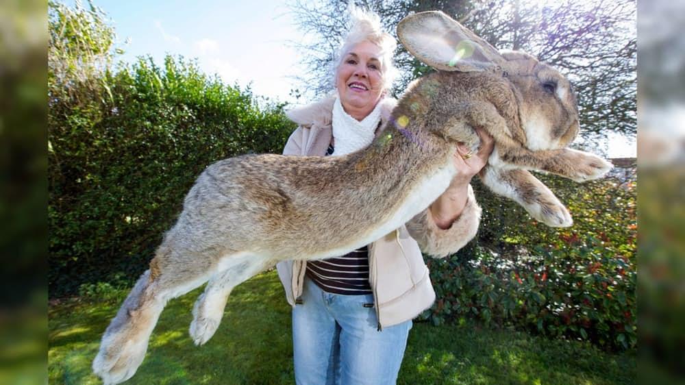 4. Самый большой кролик.
