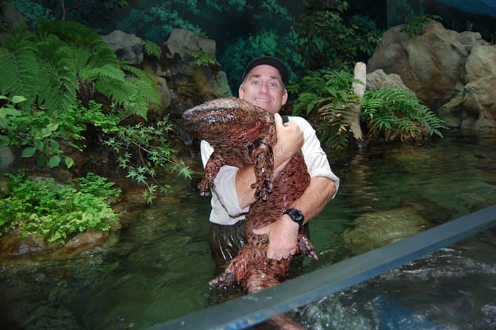 5. Китайская исполинская саламандра.