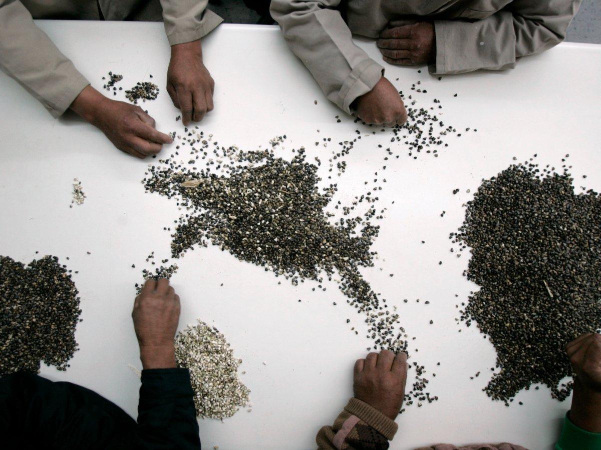 6. Семена помогут возродить сельскохозяйственные культуры в случае их уничтожения.